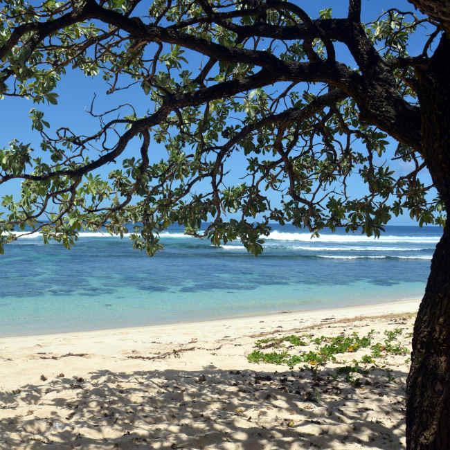 Pomponette beach freed