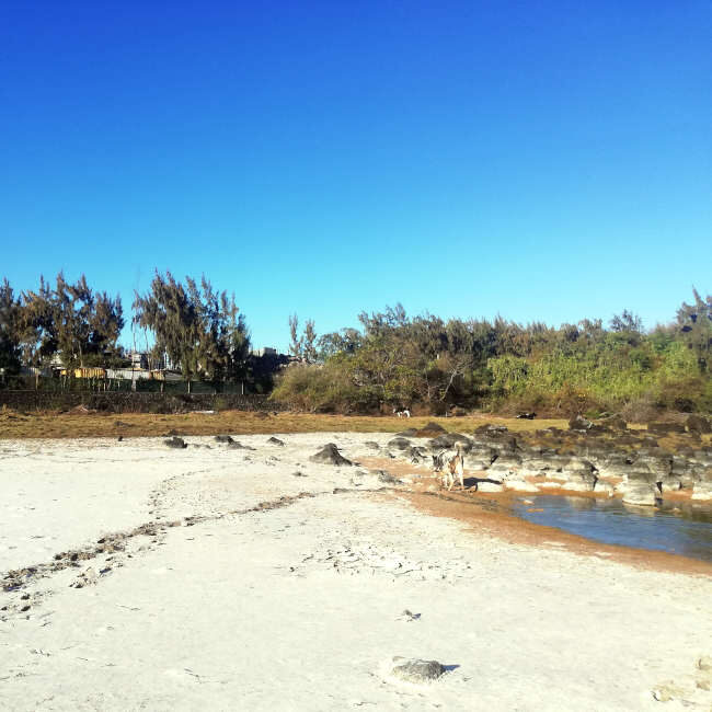 Dried-up wetland and sensitive area